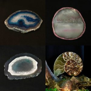 Кристаллы, срезы, аммониты