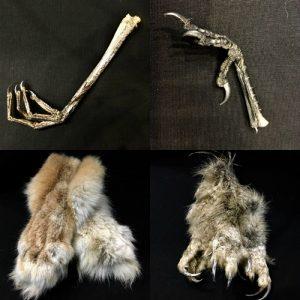 Черепа, когти, клювы, лапы, кости и другое